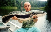 Snakehead caught at Si Nakharin reservoir, Thailand