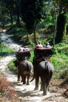 Elephant safari in Chiang Mai, Thailand