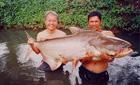 85kg Mekong catfish, Bangkok, Thailand