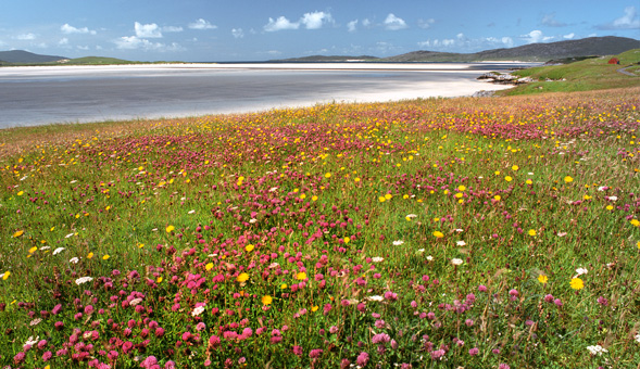 North-West Frontiers The stunning machair of the Outer Hebrides