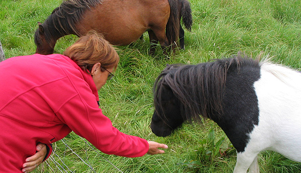 North-West Frontiers Feeding the Shetland ponies