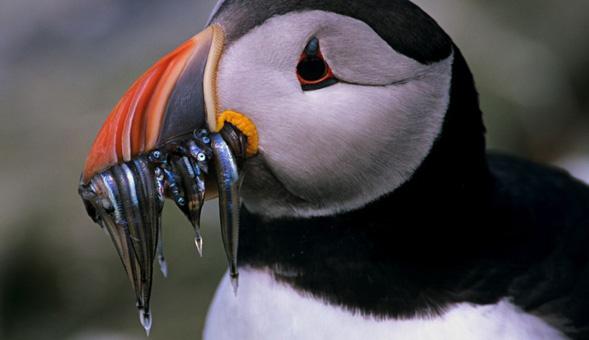 North-West Frontiers Incredible bird life