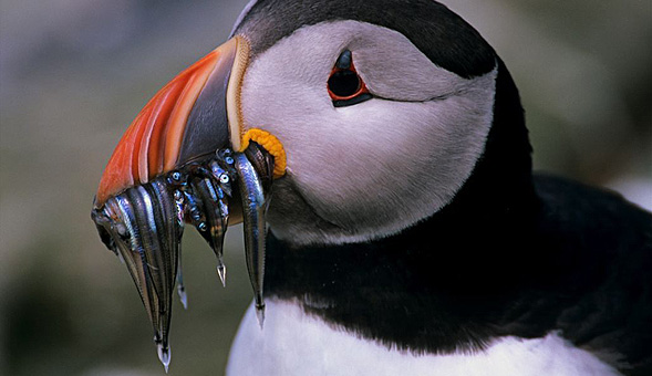 Orkney & Shetland Explorer Thumbnail