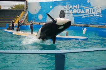 Miami Seaquarium - Attraction Ticket