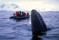 Arctic whale cruise