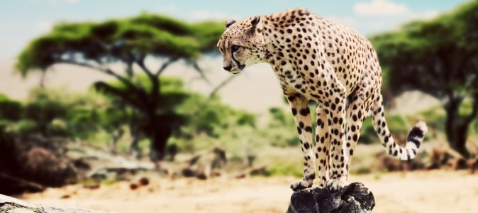 Tanzania safaris, tours and packages