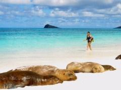 Galapagos Sea Lions
