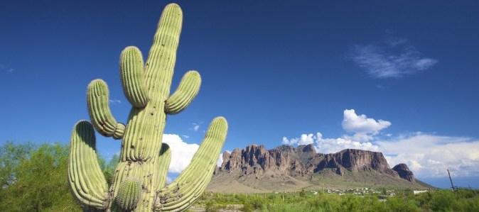Mexican Cactus