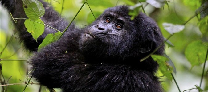 Uganda safaris, tours and packages
