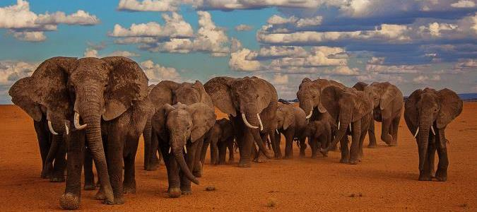 Kenya safaris, tours and packages