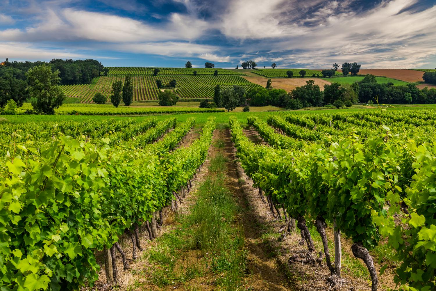 Bordeaux Vineyards & Beaches Self-Guided Cycling Holiday