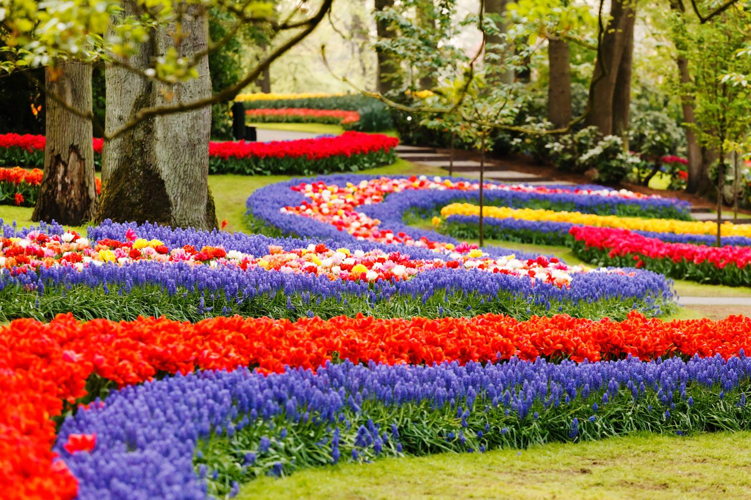 World-famous Keukenhof Flower Gardens