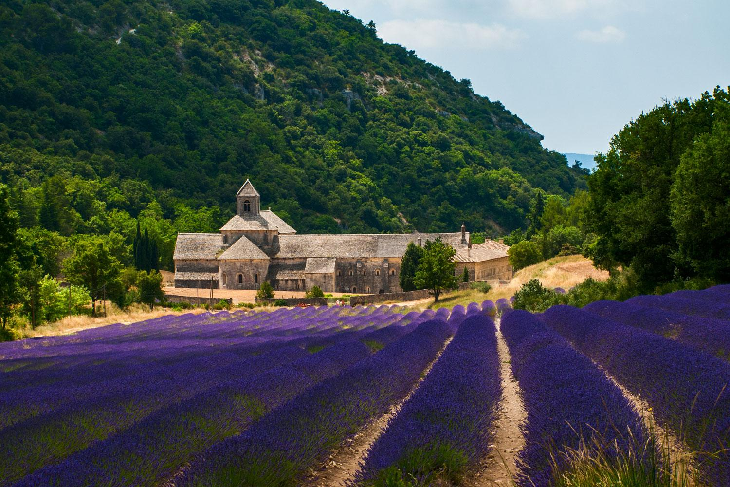 Meditative Abbey of Senanque amongst the blooming Lavender