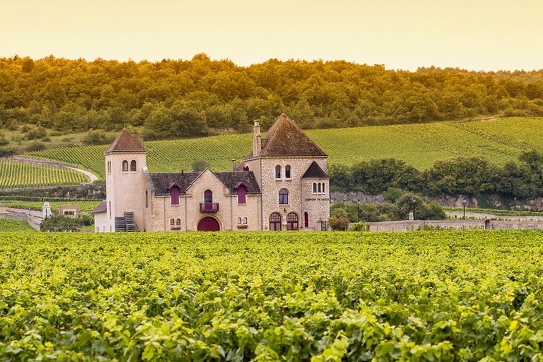 Follow Vineyard Trails past picturesque Châteaux