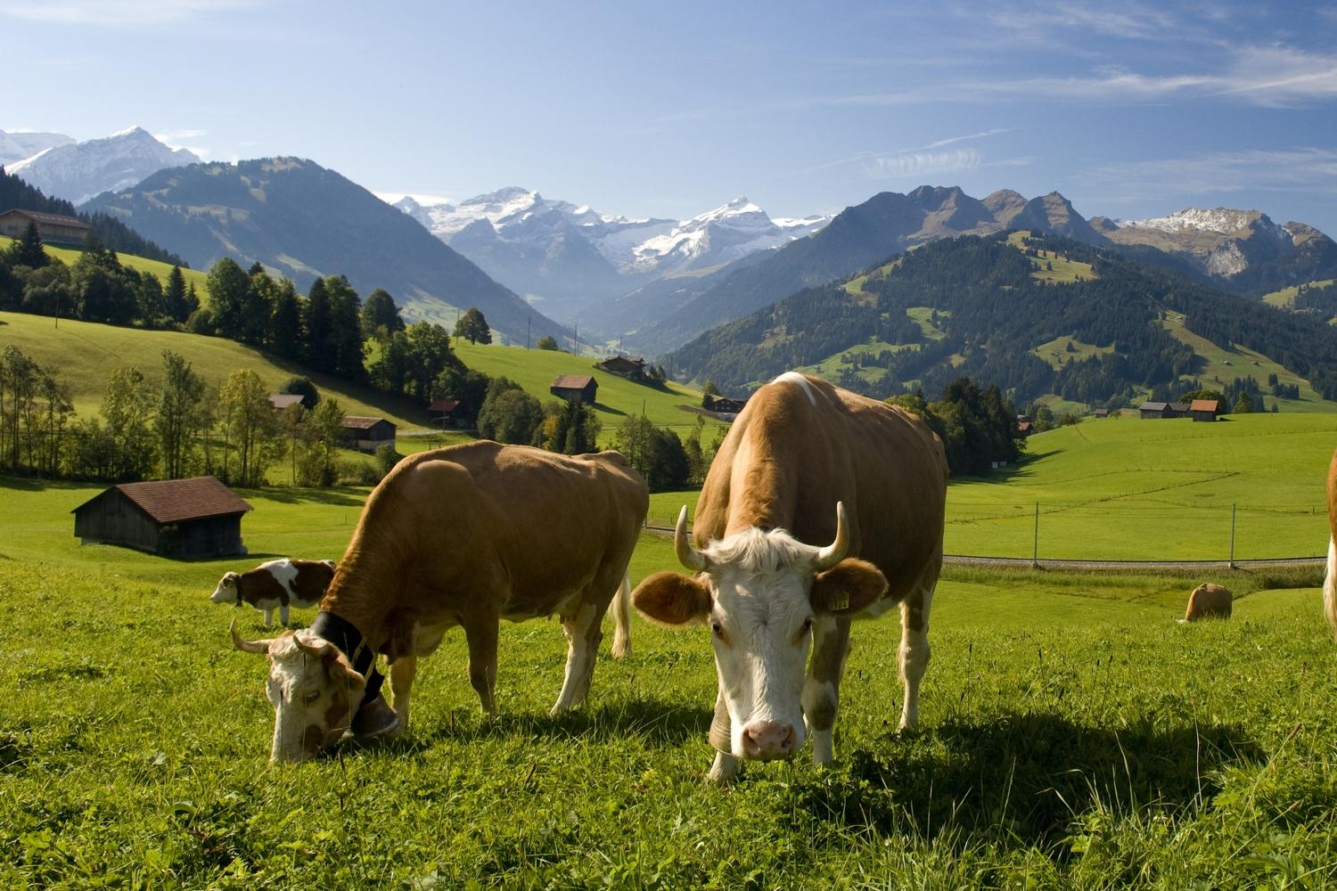 Trails of Gruyères and Gstaad (Copyright of Gstaad Saanenland Tourismus)