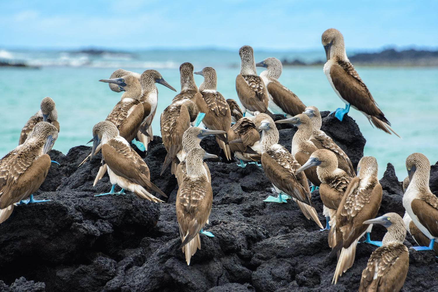 Explore the Galapagos Islands by boat, kayak, bike and on foot!