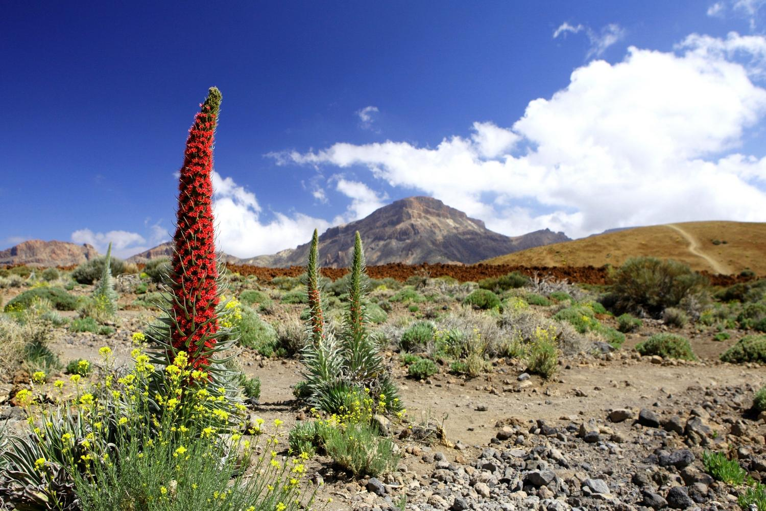 Self guided walking holiday Mount Teide Short Break
