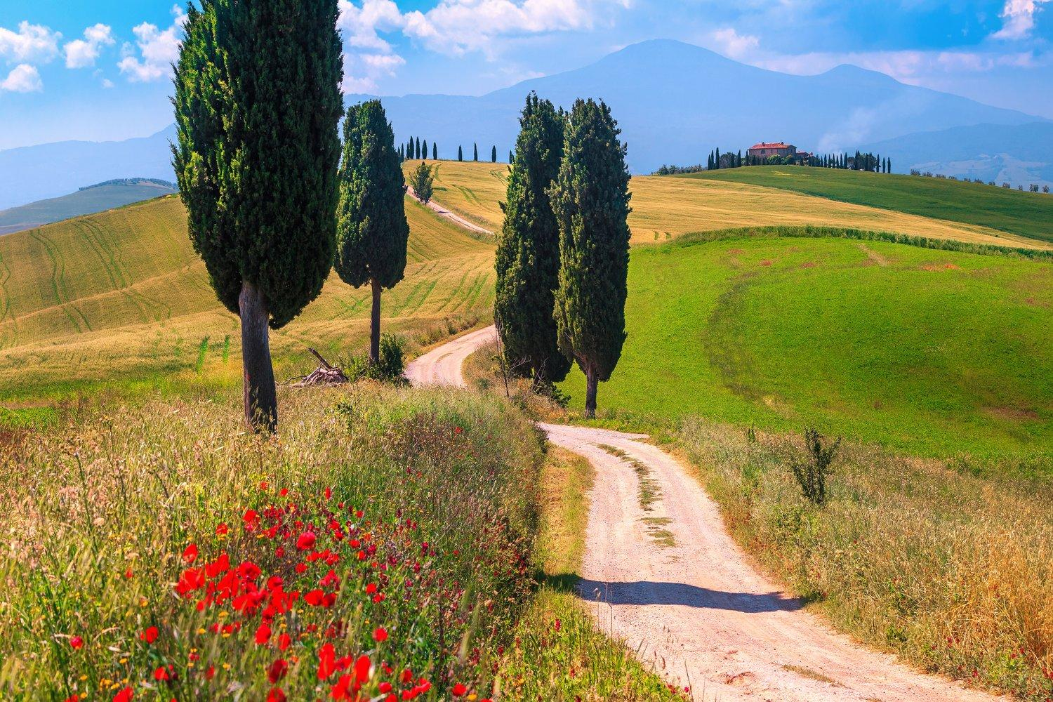 Wander through classic Tuscan landscapes of rolling hills, vineyards and olive groves