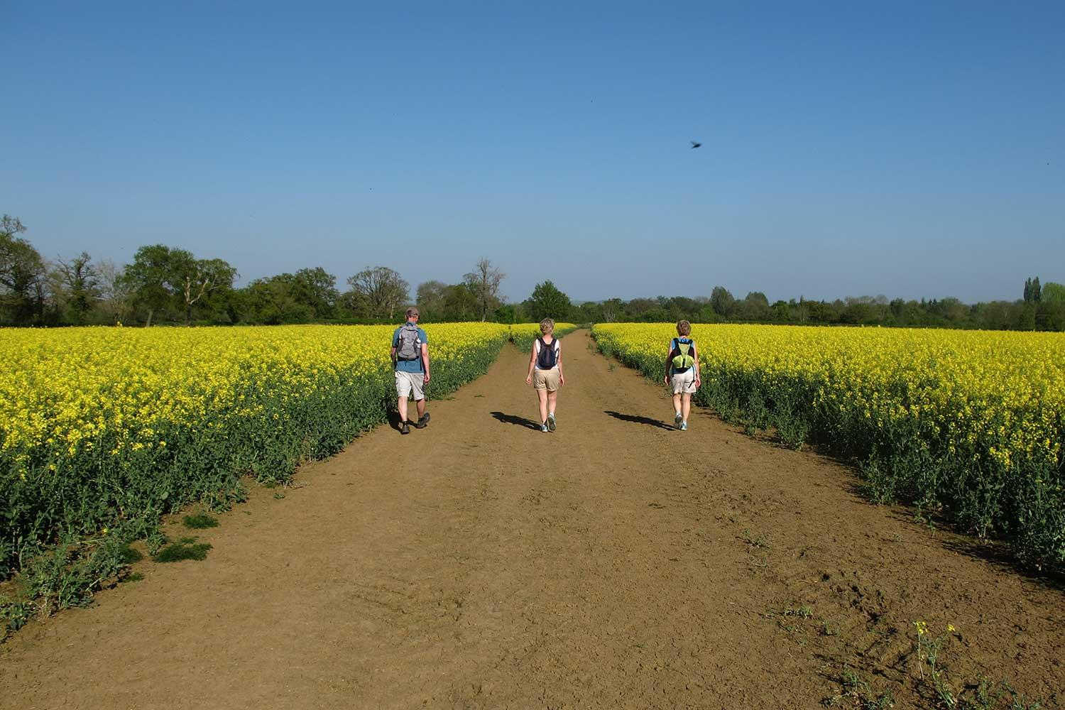 Walking through the Rapeseed fields