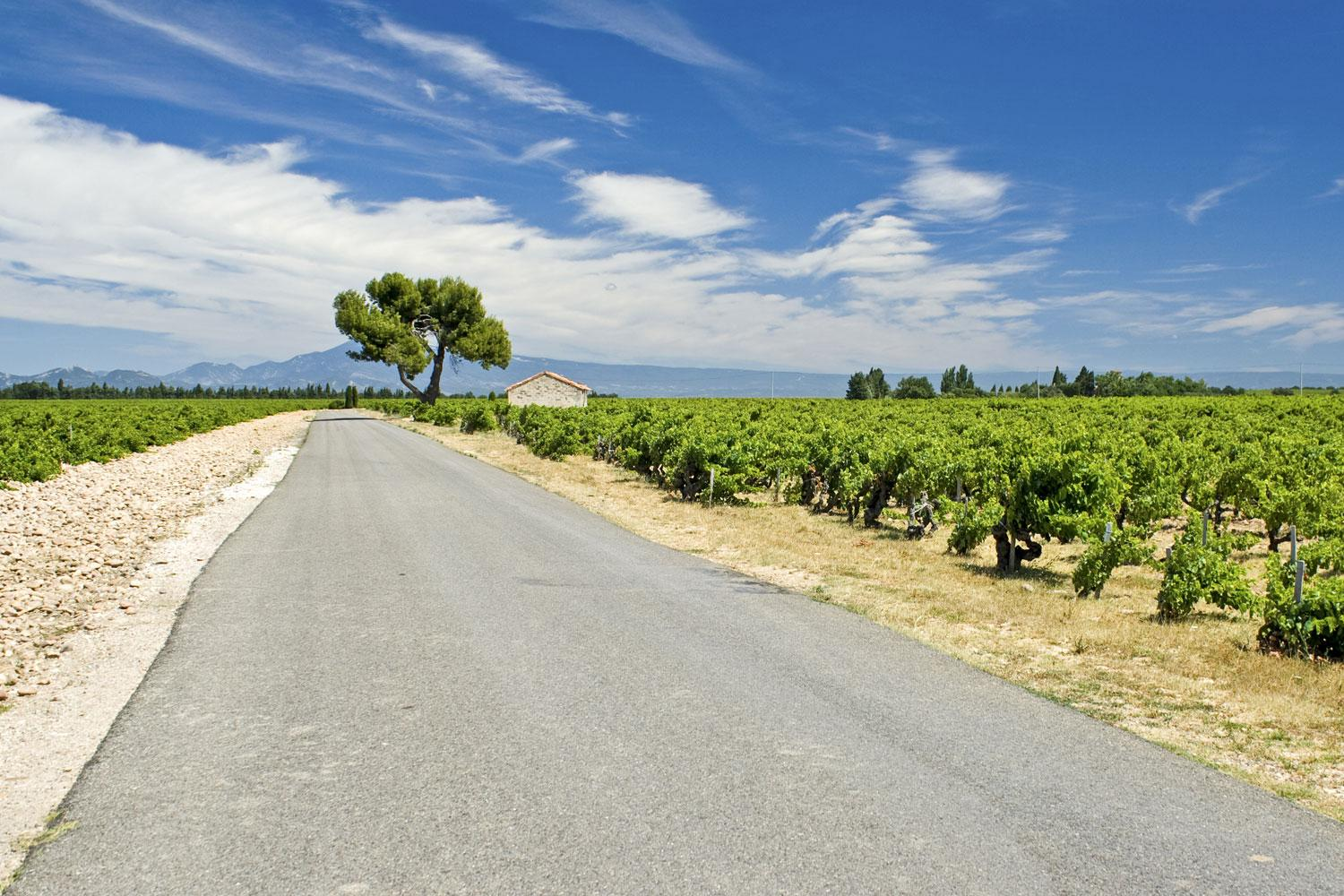 Provence: Wine Roads to Châteauneuf du Pape Cycling Self-Guided Cycling Trip