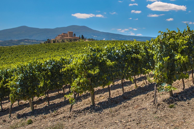 Classic Rioja Vineyards