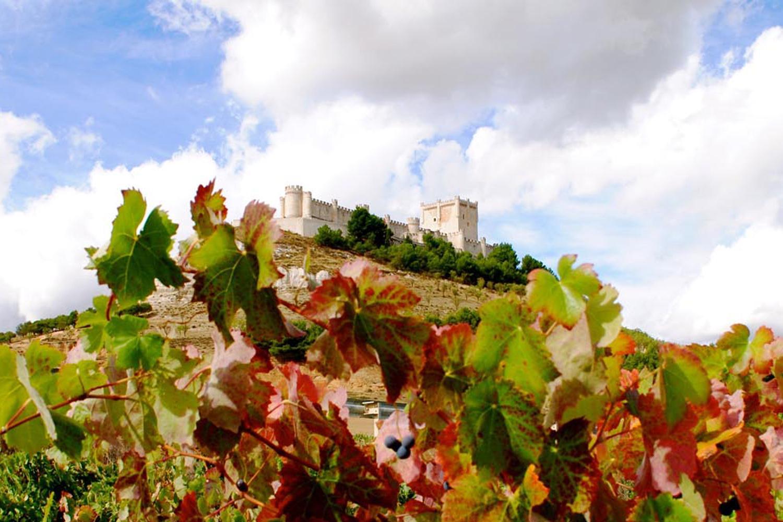Castillo de Peñafiel y viñedos, Peñafiel, Valladolid