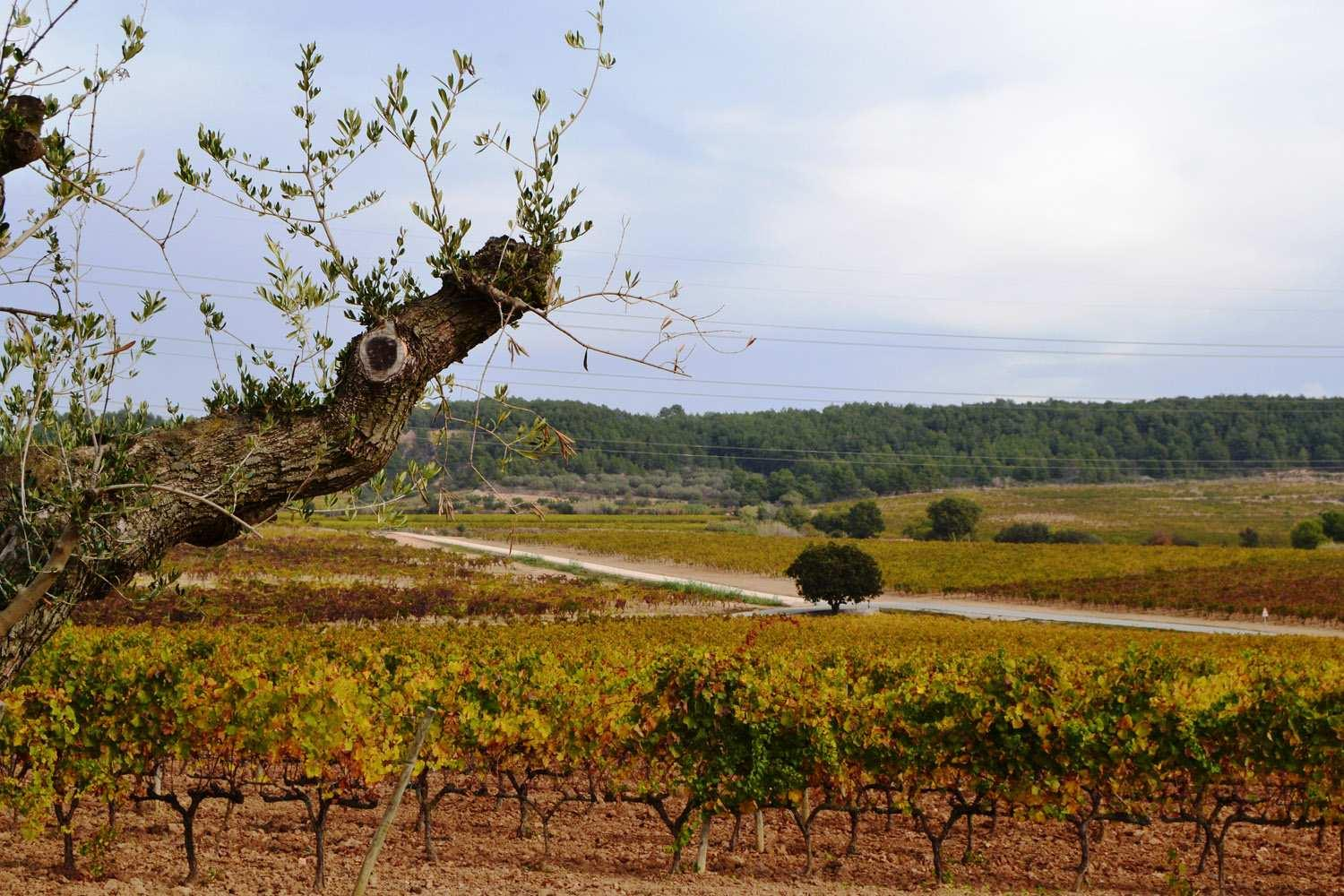 1 day wine tour near Barcelona