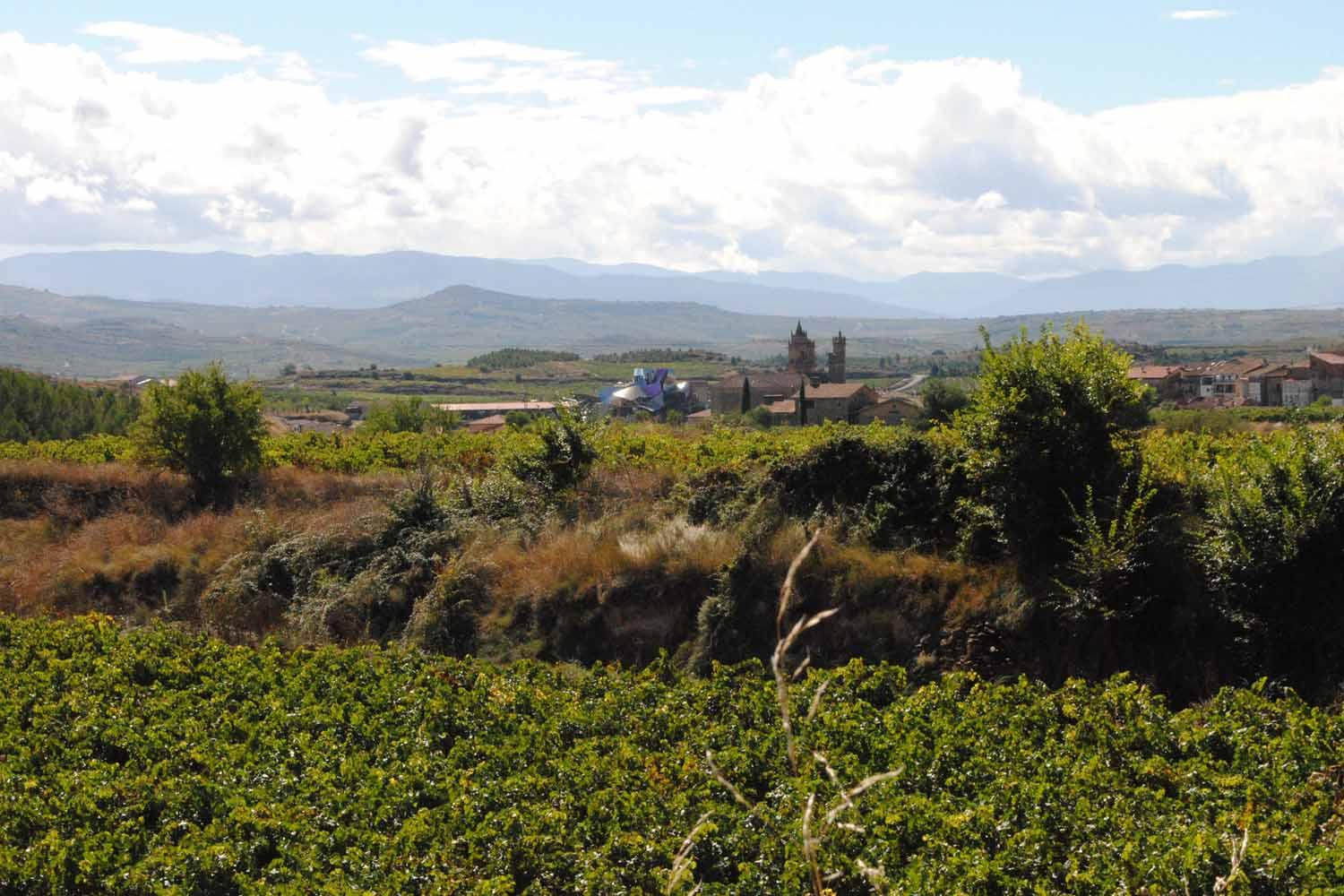 1 day guided tour in Rioja