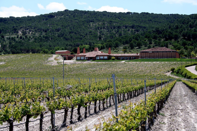 Visita a Bodegas Viña Mayor - Ribera del Duero