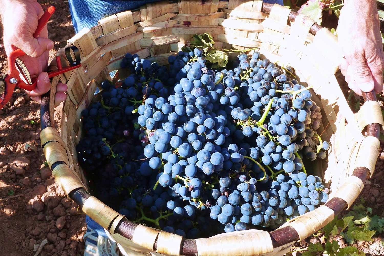 actividad de enoturismo en Rioja
