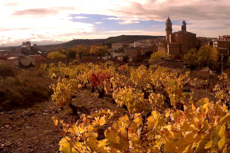 Ribera del Duero & Rioja wine tour