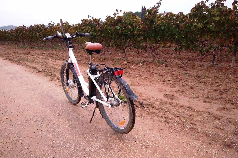 Experiencia en bicicleta y con viñedo y cata en Penedes