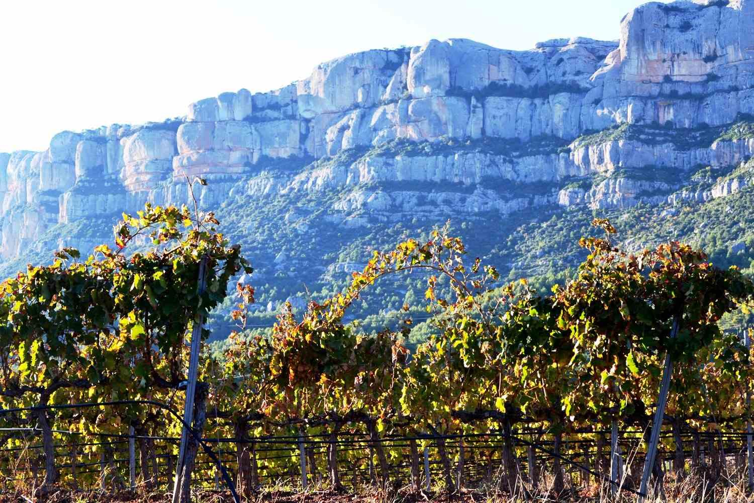 Wine tour in Priorat - vineyards and mountain in the natural park