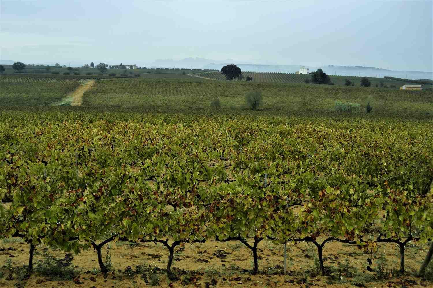 Cycle, Taste and Eat. A guided Tour near Barcelona