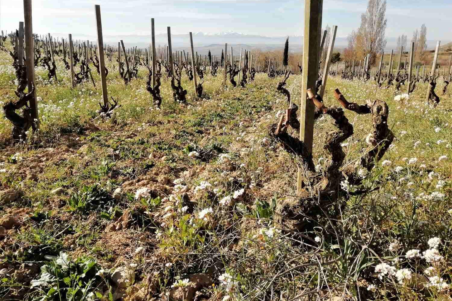 Terroir in Rioja alavesa