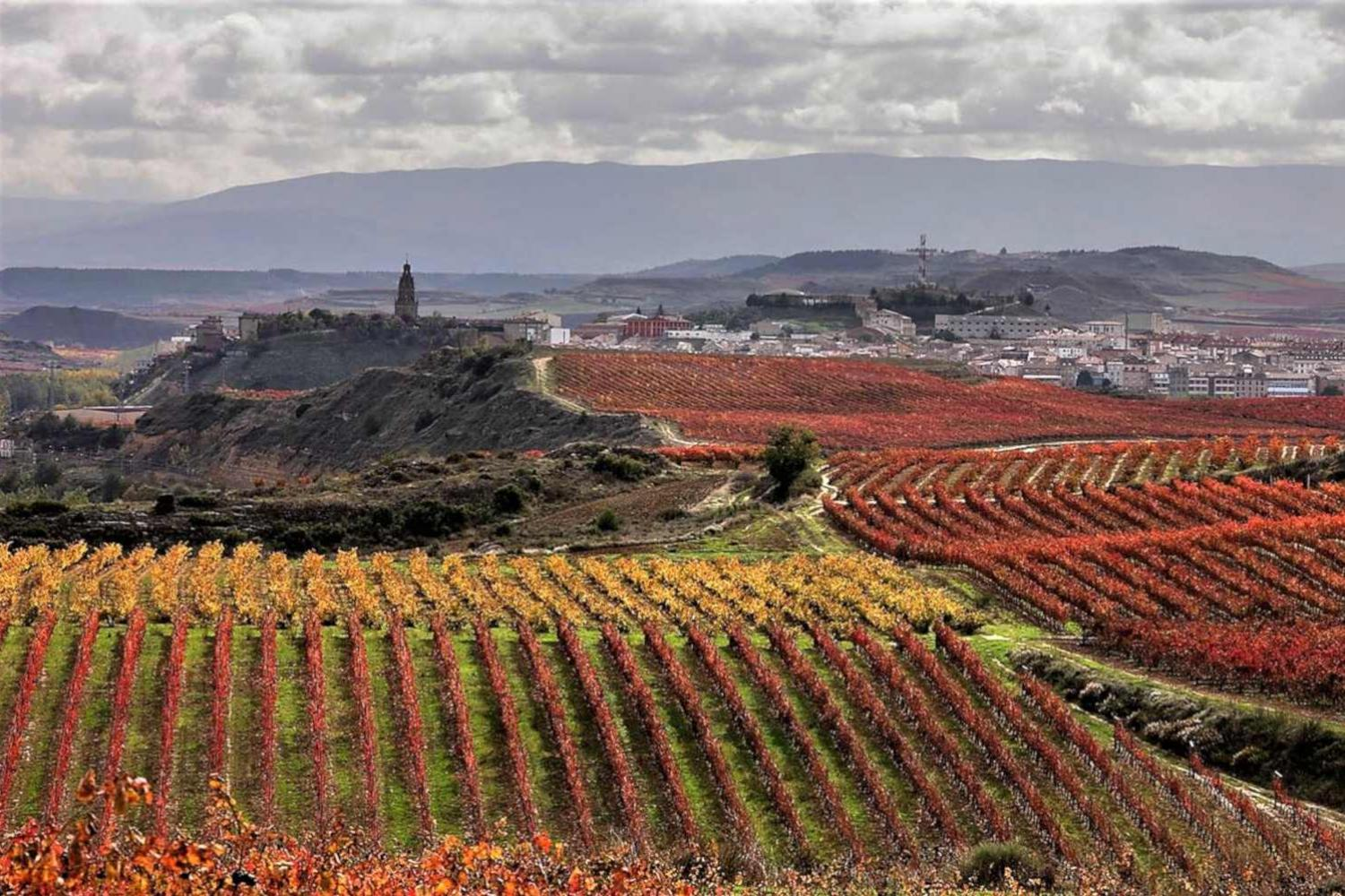 Landscape in Rioja during a 2 day tour from Bilbao