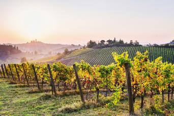 Private Chianti and Hilltowns Shore Excursion - Chianti Wine region