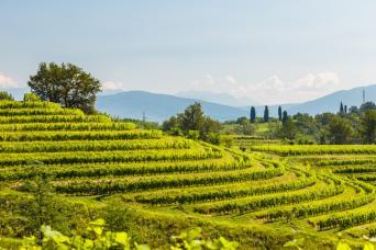 Private Friuli Wine Tour
