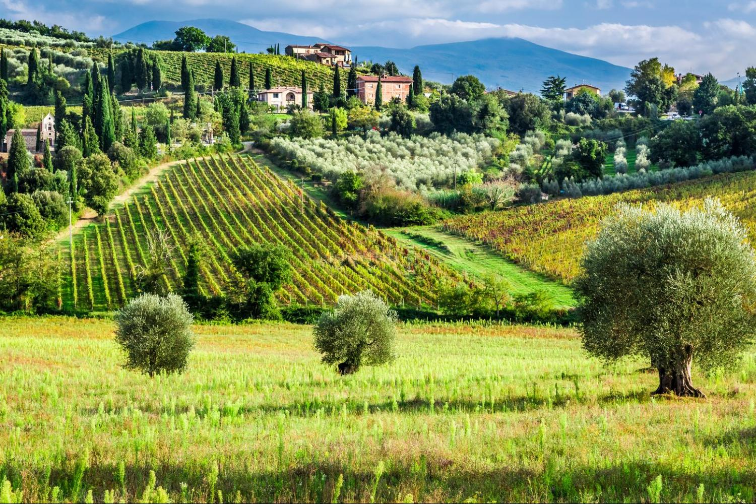 montalcino wine tour from Florence in small group