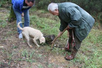 Tuscany truffle hunting & Chianti wine tour