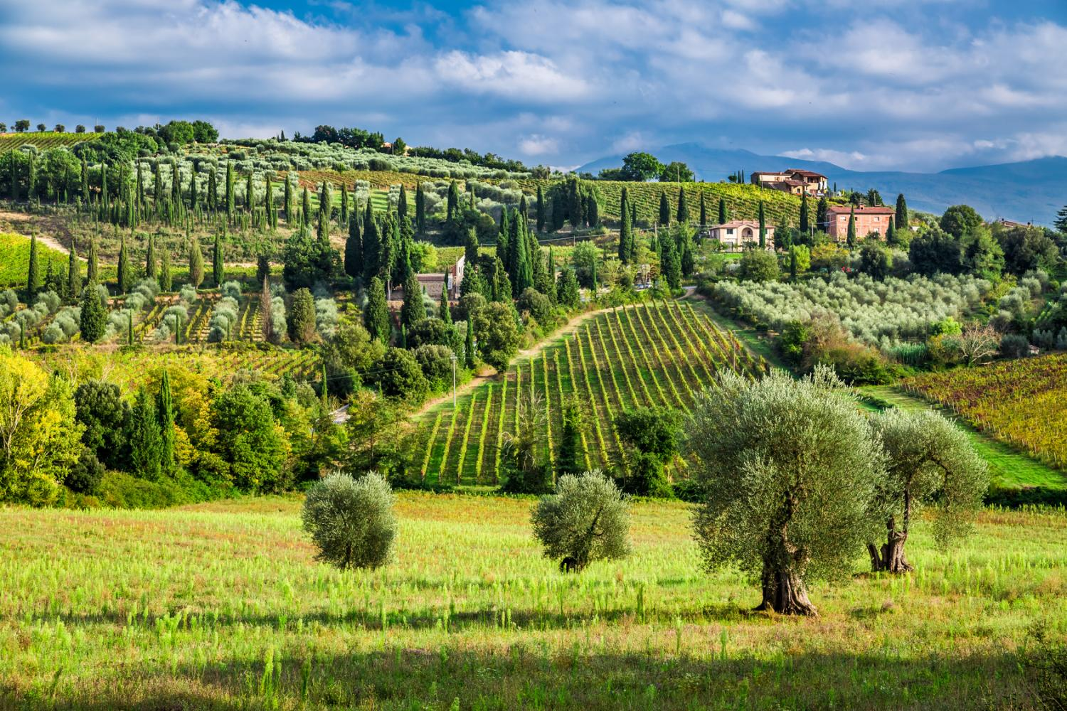 Enjoy frequent photo-stops to capture the beauty of the Tuscan landscape