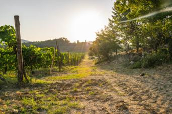 You can visit a celebrated winery to tour the facilities and enjoy a full wine tasting
