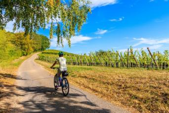 Puglia Bike Tour with Olive Oil tasting in Itria Valley