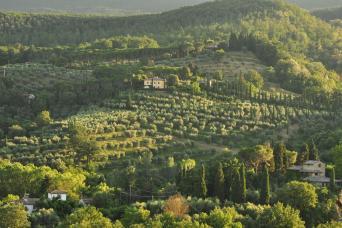 Private Tuscany Chianti Half-Day Wine Tour