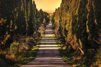 Private Bolgheri and Super Tuscan Wines Tour