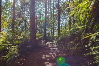 Kumano Kodo Complete self-guided walking 9 days