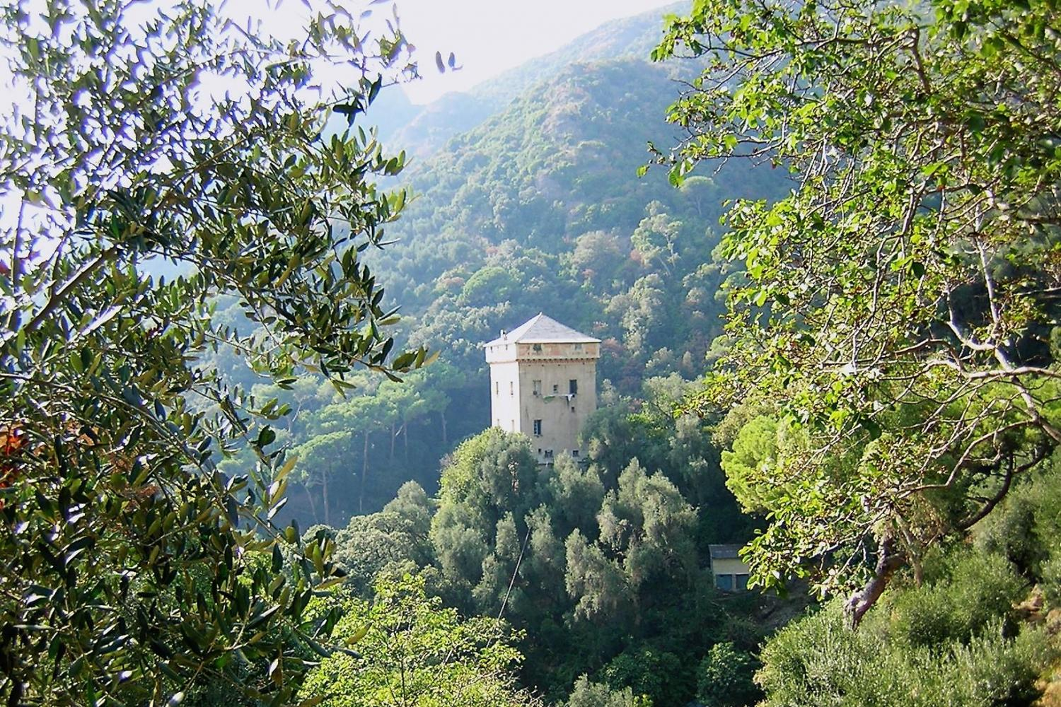 Abbey of San Fruttuoso through olive trees...what a sight!