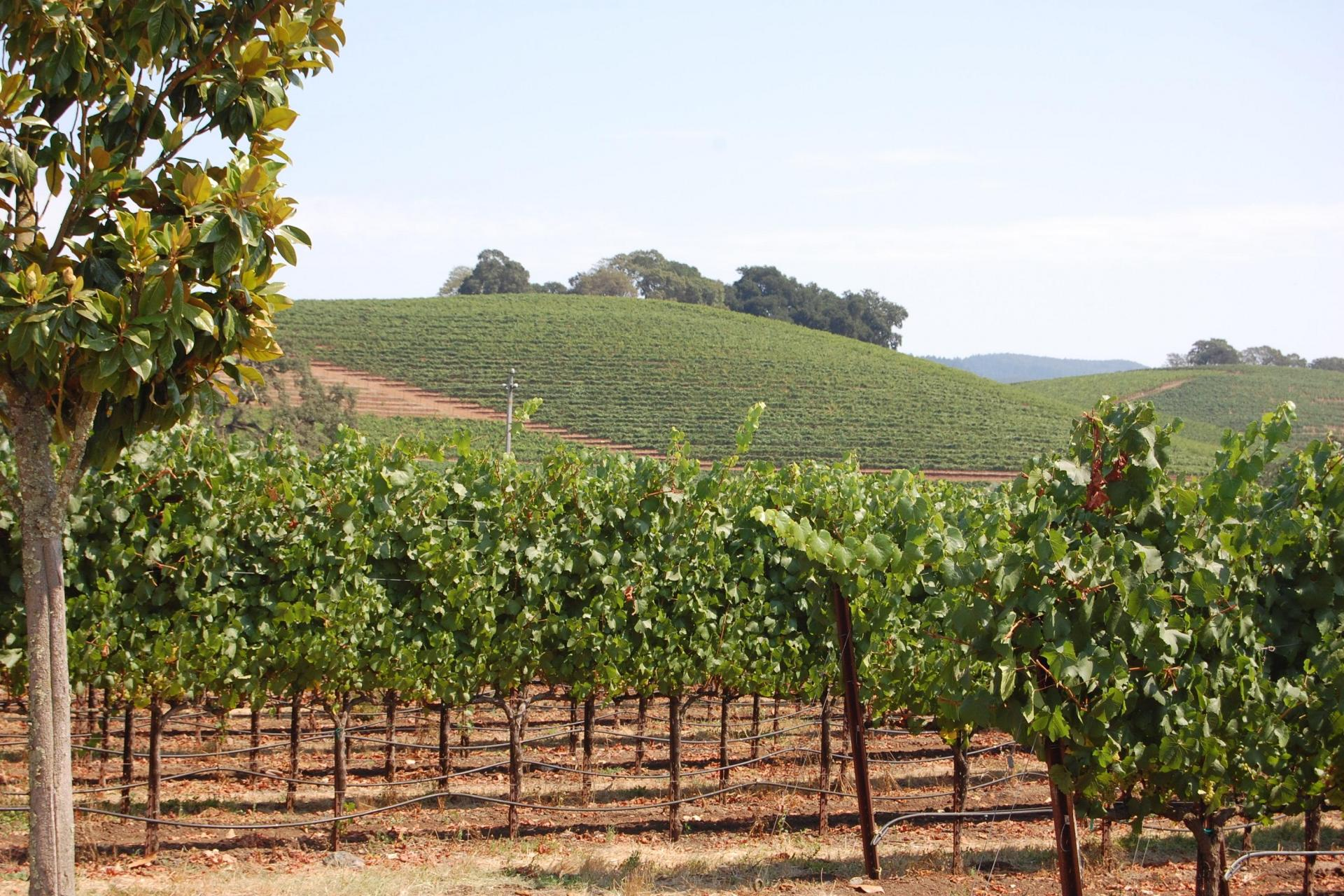 Sonoma Wine Country; credit: CA Travel & Tourism/Visit California