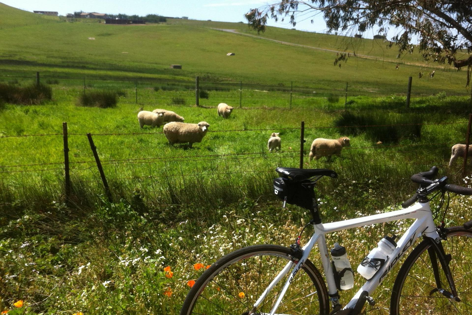 bicycling tours wine country california