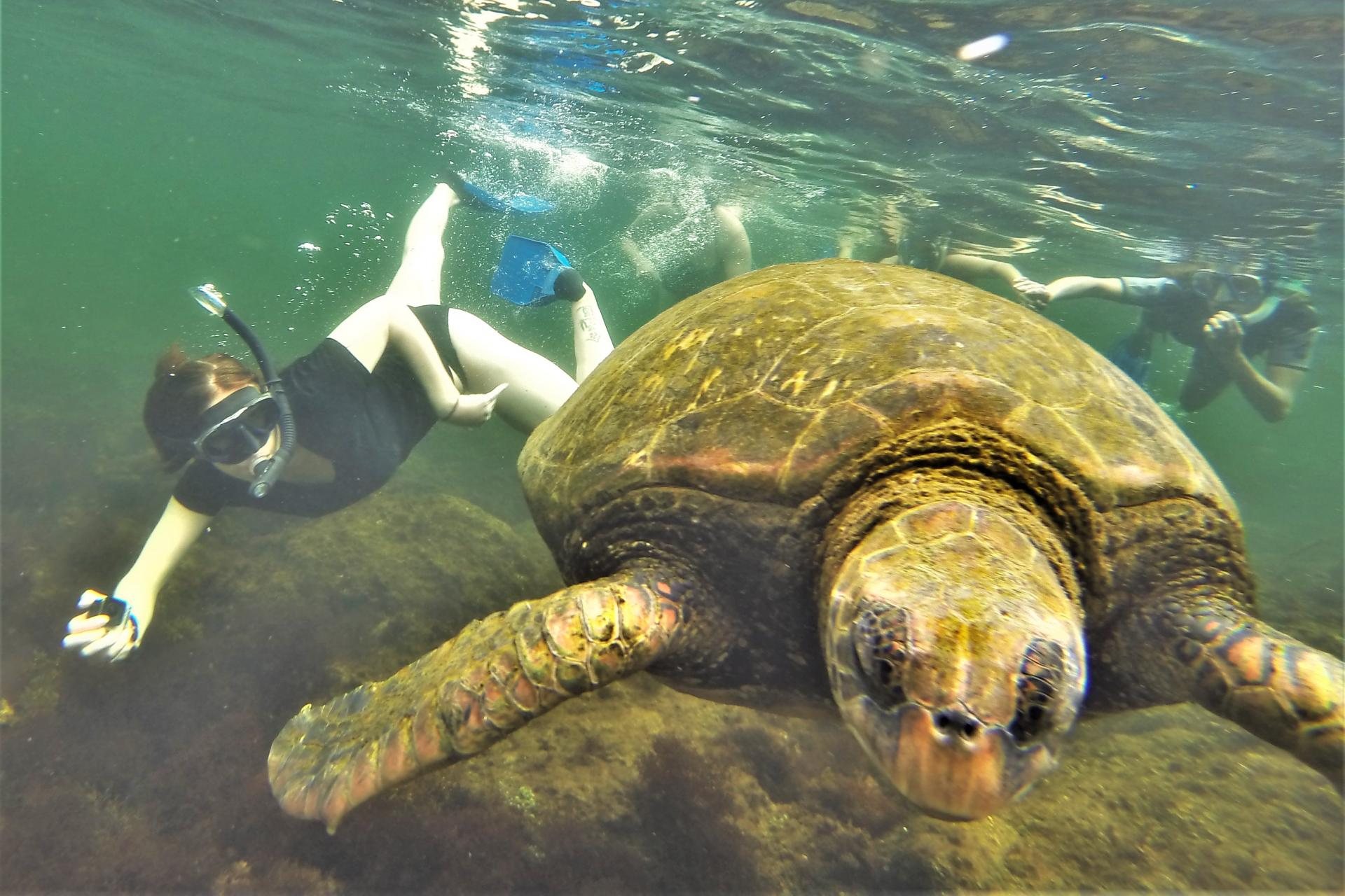 Snorkeling with sea turtles in the Galapagos